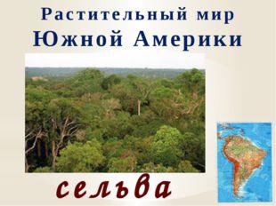 Растительный мир Южной Америки сельва