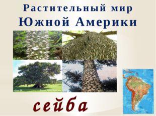 Растительный мир Южной Америки сейба