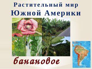 Растительный мир Южной Америки банановое дерево