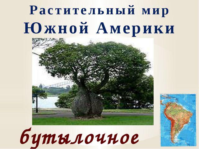 Растительный мир Южной Америки бутылочное дерево