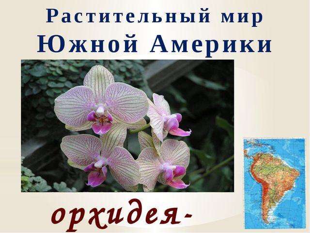Растительный мир Южной Америки орхидея-бабочка