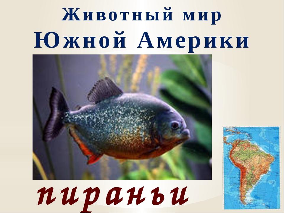Животный мир Южной Америки пираньи