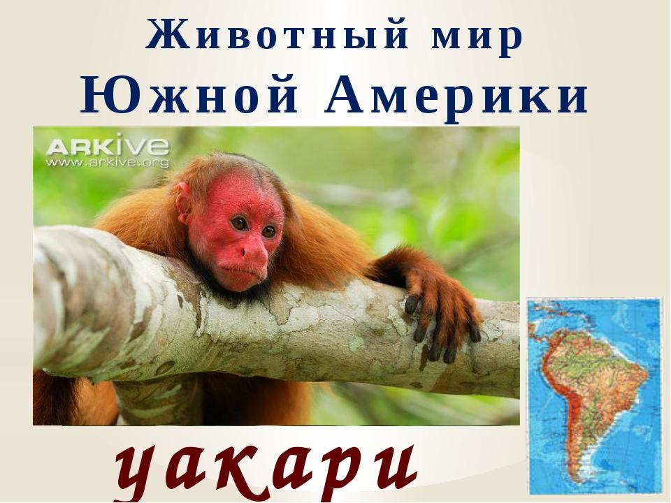 Животный мир Южной Америки уакари