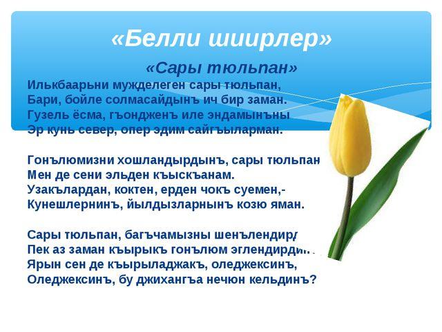 «Сары тюльпан» Илькбаарьни мужделеген сары тюльпан, Бари, бойле солмасайдынъ...