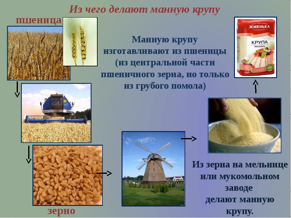 Манную крупу изготавливают из пшеницы (из центральной части пшеничного зерна,...