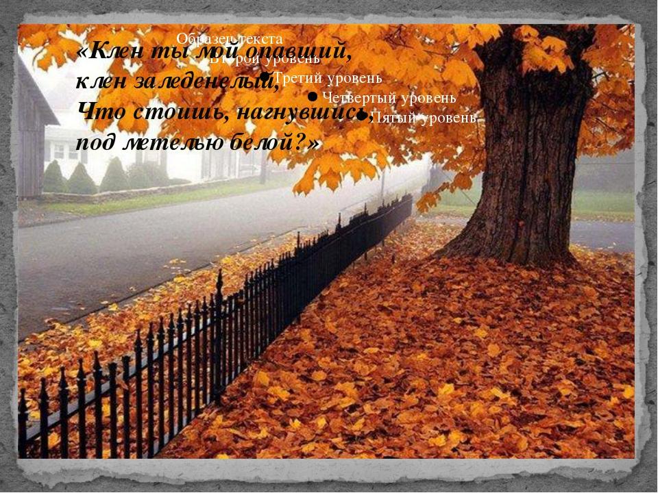 «Клен ты мой опавший, клен заледенелый, Что стоишь, нагнувшись, под метелью б...