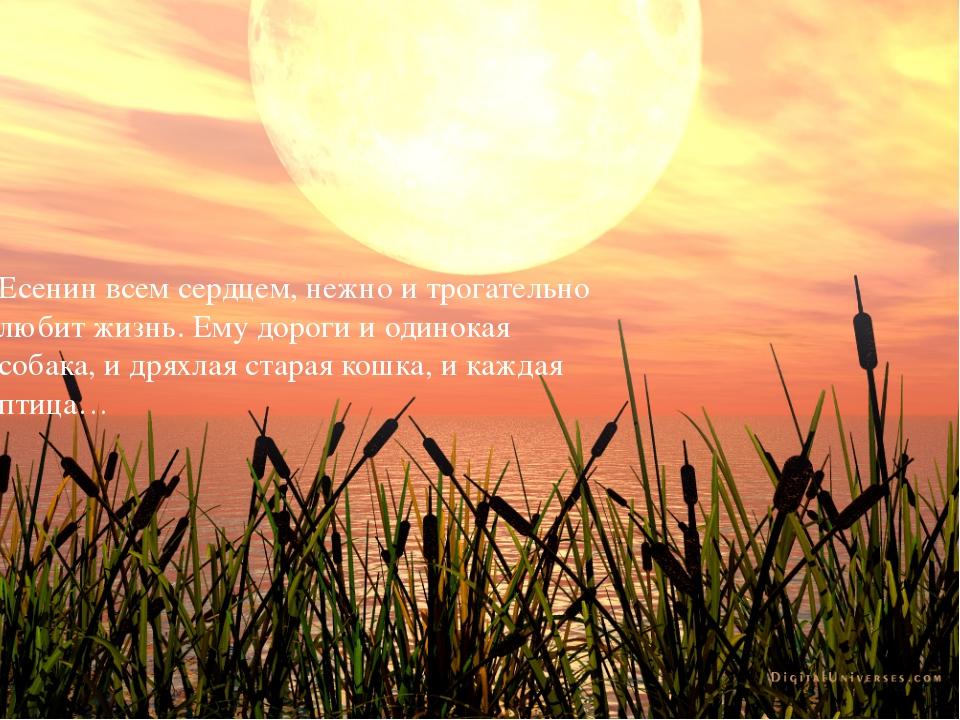 Есенин всем сердцем, нежно и трогательно любит жизнь. Ему дороги и одинокая...