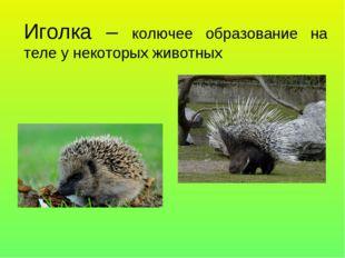 Иголка – колючее образование на теле у некоторых животных