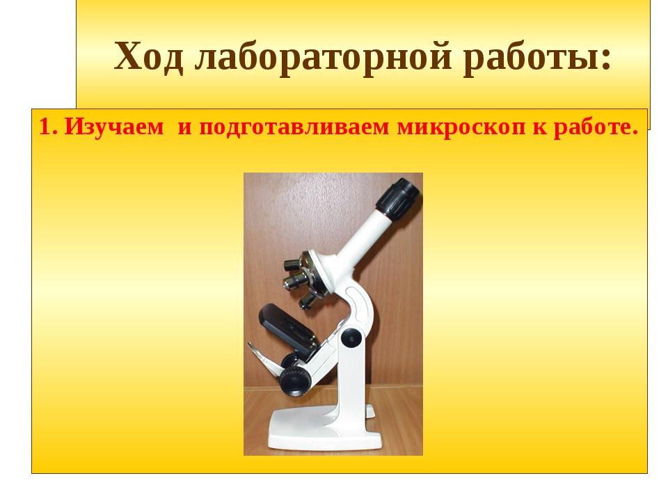 Ход лабораторной работы: 1. Изучаем и подготавливаем микроскоп к работе.