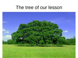 The tree of our lesson