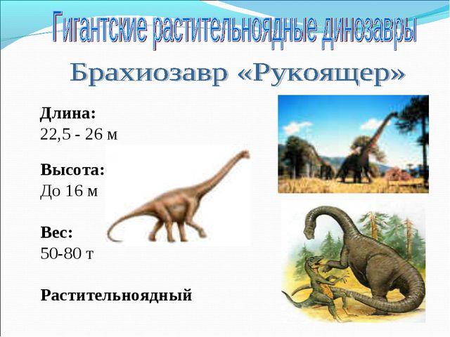 Длина: 22,5 - 26 м Высота: До 16 м Вес: 50-80 т Растительноядный