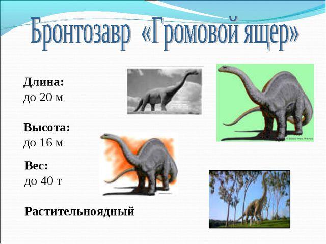 Длина: до 20 м Высота: до 16 м Вес: до 40 т Растительноядный
