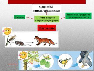 Свойства живых организмов Обмен веществ с окружающей средой Дыхание Питание В