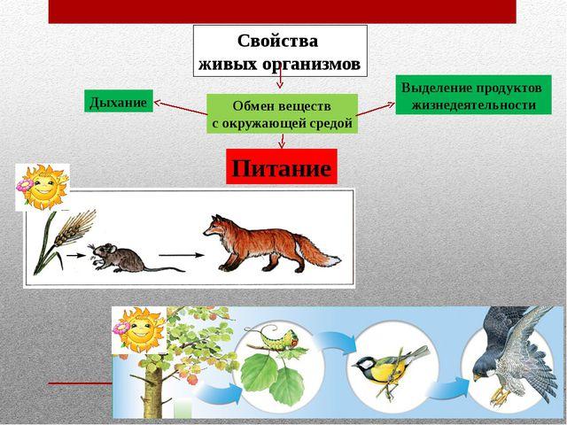 Свойства живых организмов Обмен веществ с окружающей средой Дыхание Питание В...