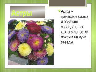 Астры Астра – греческое слово и означает «звезда», так как его лепестки похож
