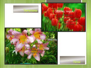 Лилии Тюльпаны