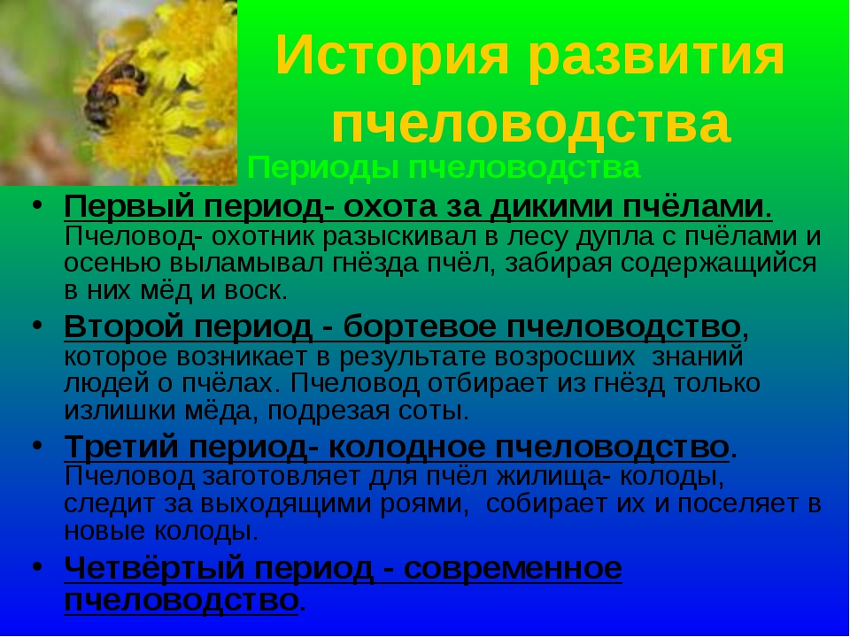 История развития пчеловодства Периоды пчеловодства Первый период- охота за ди...