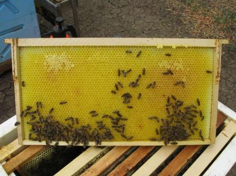 Вощина для пчел