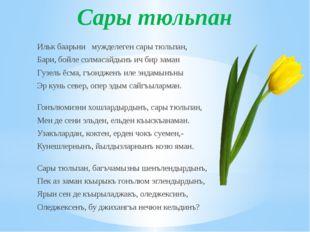 Сары тюльпан Ильк баарьни мужделеген сары тюльпан, Бари, бойле солмасайдынъ и
