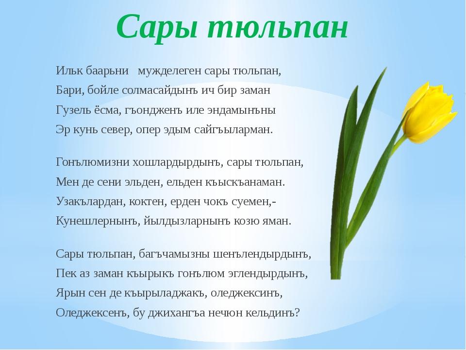 Сары тюльпан Ильк баарьни мужделеген сары тюльпан, Бари, бойле солмасайдынъ и...