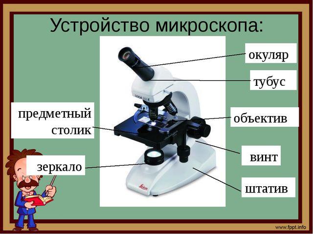 Устройство микроскопа: окуляр объектив тубус винт предметный столик зеркало ш...