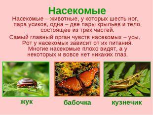 Насекомые Насекомые – животные, у которых шесть ног, пара усиков, одна – две