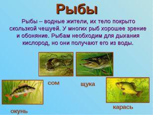 Рыбы Рыбы – водные жители, их тело покрыто скользкой чешуей. У многих рыб хор
