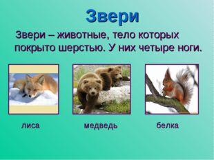 Звери Звери – животные, тело которых покрыто шерстью. У них четыре ноги. лиса