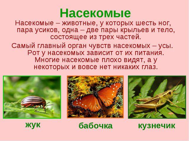 Насекомые Насекомые – животные, у которых шесть ног, пара усиков, одна – две...