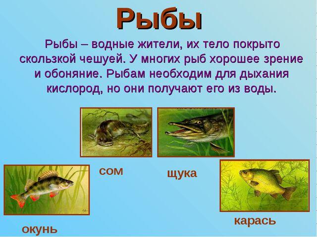 Рыбы Рыбы – водные жители, их тело покрыто скользкой чешуей. У многих рыб хор...
