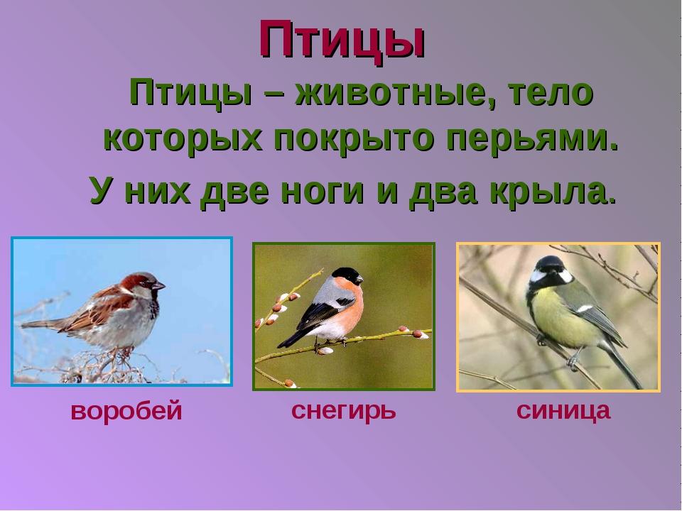 Птицы Птицы – животные, тело которых покрыто перьями. У них две ноги и два кр...