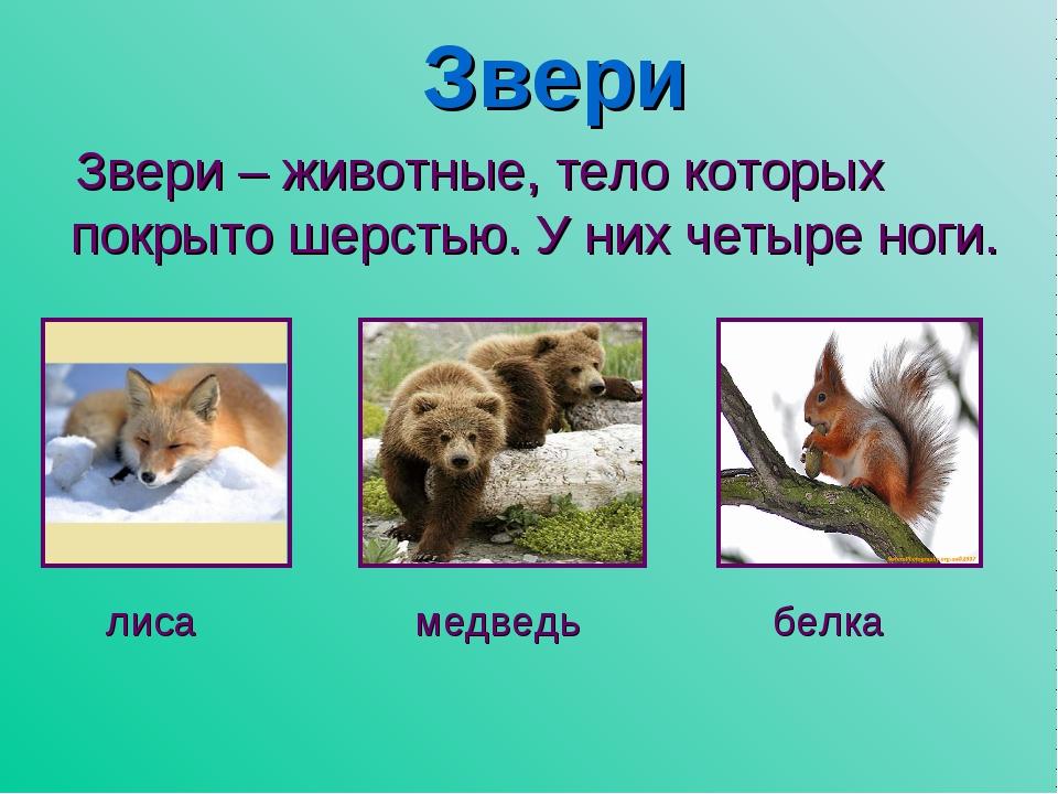 Звери Звери – животные, тело которых покрыто шерстью. У них четыре ноги. лиса...