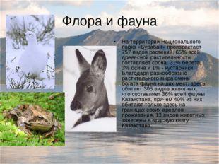 Флора и фауна На территории Национального парка «Бурабай» произрастает 757 ви