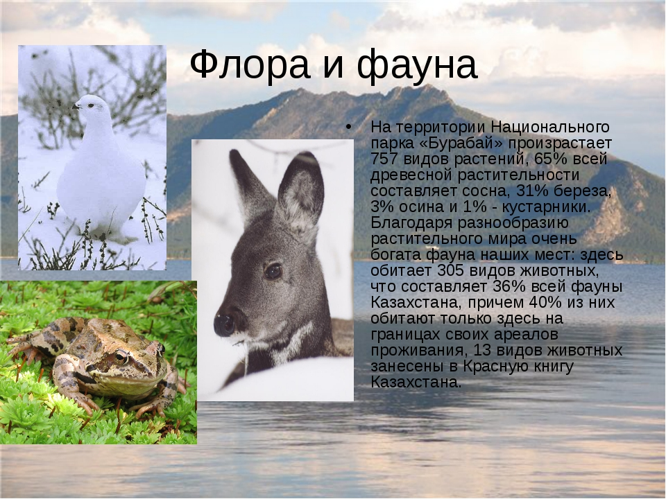 Флора и фауна На территории Национального парка «Бурабай» произрастает 757 ви...