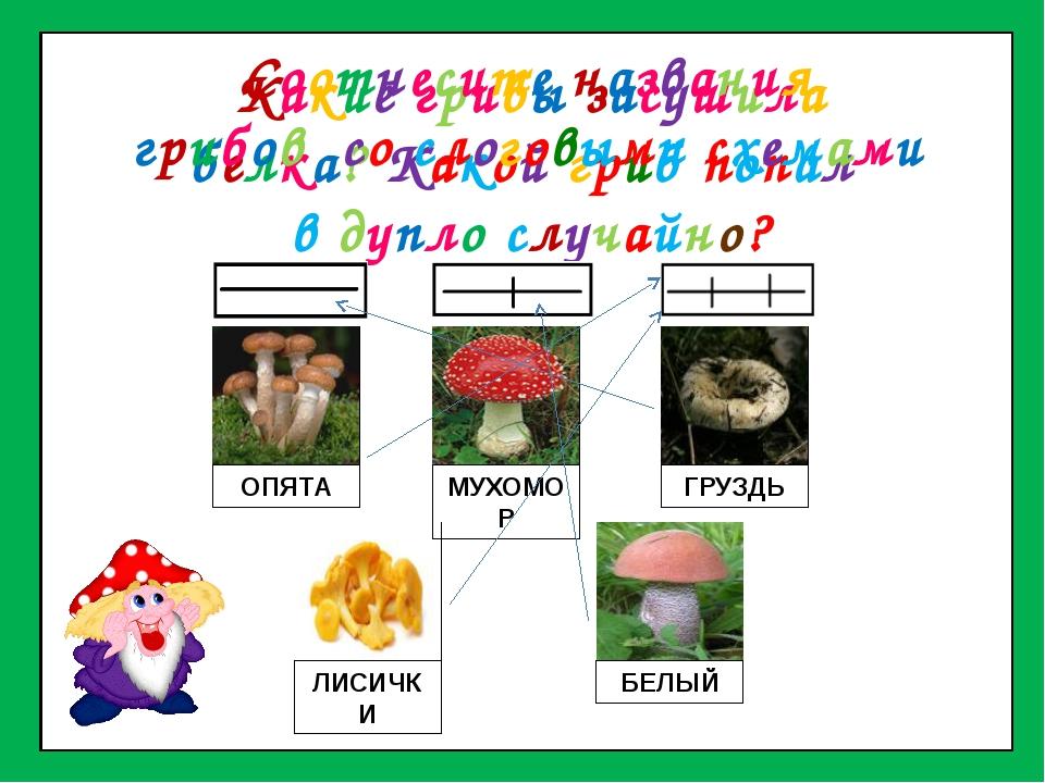 Какие грибы засушила белка? Какой гриб попал в дупло случайно? ОПЯТА МУХОМОР...