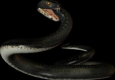http://i39.beon.ru/55/59/1235955/93/82035993/Twins72_snake5.png