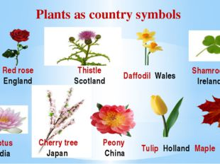 Plants as country symbols Lotus India Red rose England Thistle Scotland Daffo