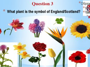 What plant is the symbol of England/Scotland? Question 3 Round I