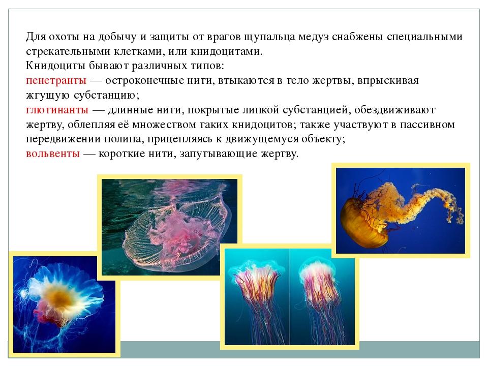 Для охоты на добычу и защиты от врагов щупальца медуз снабжены специальными с...