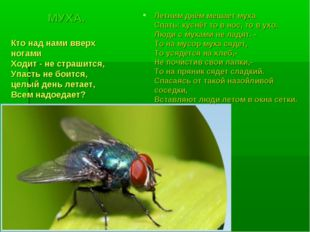 МУХА. Летним днём мешает муха Спать: куснёт то в нос, то в ухо. Люди с мухами