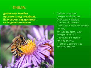 ПЧЕЛА. Пчёлка золотая сладенький медок Собрала, летая, в глиняный горшок. С