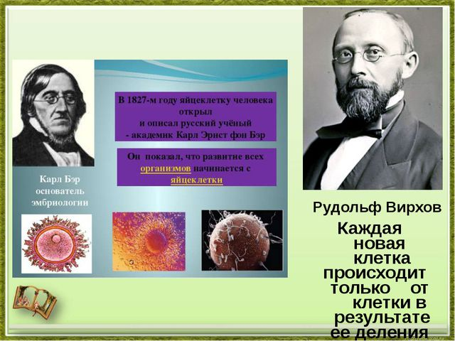 Рудольф Вирхов Каждая новая клетка происходит только от клетки в результате е...