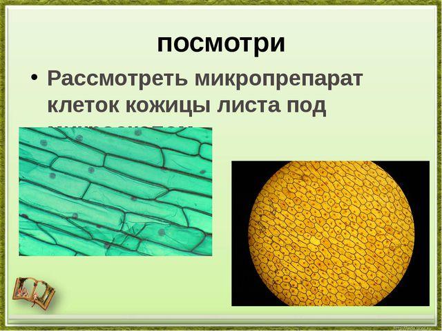 посмотри Рассмотреть микропрепарат клеток кожицы листа под микроскопом.