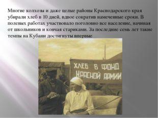 Многие колхозы и даже целые районы Краснодарского края убирали хлеб в 10 дней