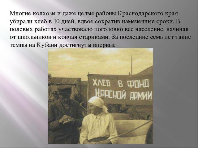 Многие колхозы и даже целые районы Краснодарского края убирали хлеб в 10 дней...