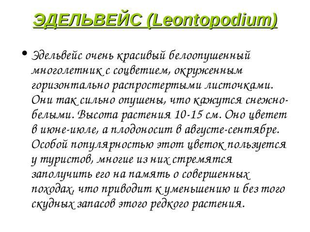 ЭДЕЛЬВЕЙС (Leontopodium) Эдельвейс очень красивый белоопушенный многолетник с...