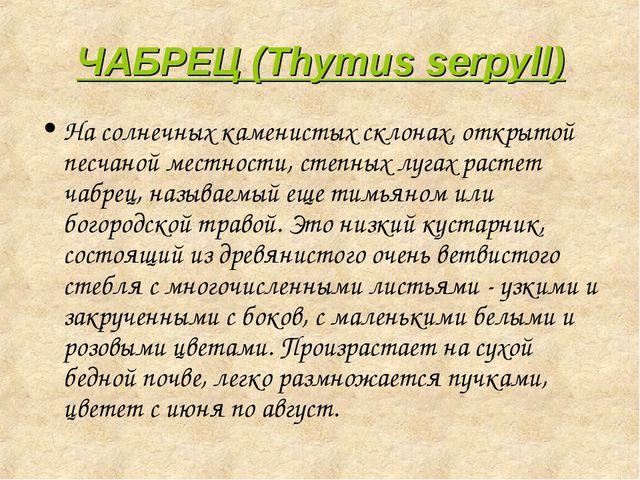 ЧАБРЕЦ (Thymus serpyll) На солнечных каменистых склонах, открытой песчаной ме...