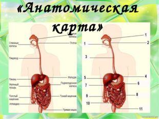 «Анатомическая карта»