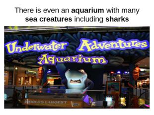 There is even an aquarium with many sea creatures including sharks