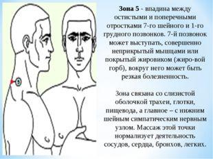 Зона 5 - впадина между остистыми и поперечными отростками 7-го шейного и 1-го
